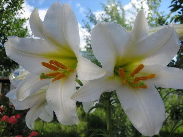 Lule dhe vetëm lule! -y3K7BdekIUihQ6NLDi5pMeDr2wA_OuD8frbIvEHGXqeg9kdwpaUCw==
