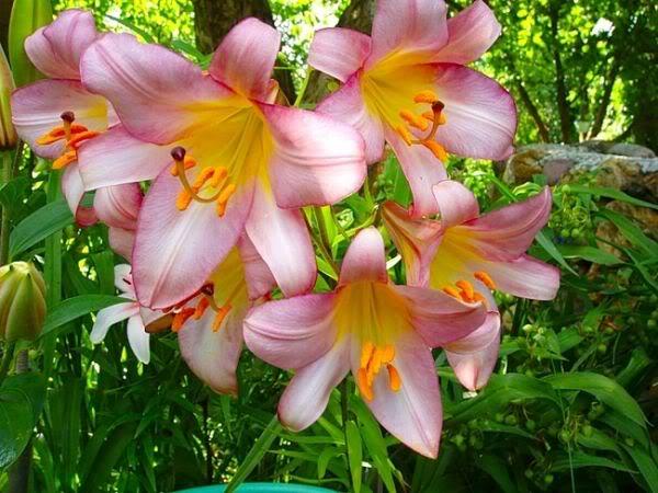 Lule dhe vetëm lule! 3Wyx5jqntGfiwW33Ciekrs3R23io_QyqCfN2y1l17gQMbL9_cRuNYA==