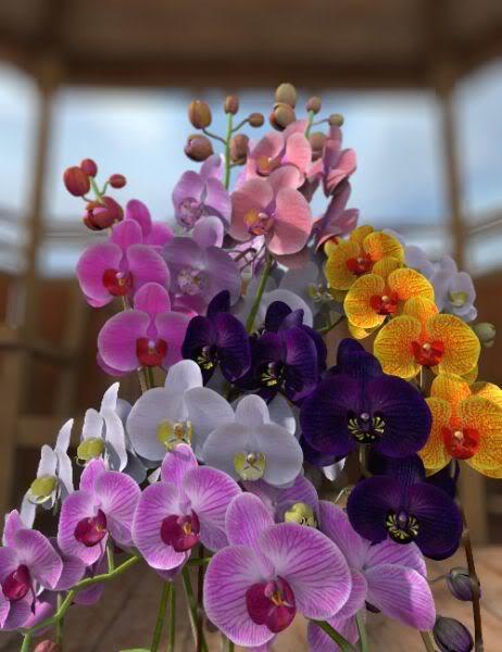 献上最美的鲜花,祝你新年快乐! - 梁溪镜明 - 尤悠闲记
